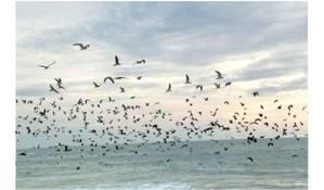 photo envol oiseaux 3